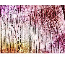 Snow Twigs Photographic Print