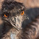 Emu close-up by Dominika Aniola