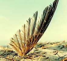 Lost feather by Ovation66