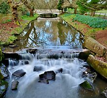 Roath Brook, Roath Park, Cardiff by Paula J James