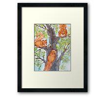 Squirrel Games Framed Print