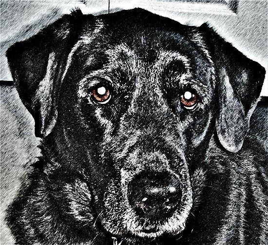 Pencil Dog by MasonTaylor