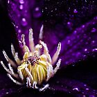 The jellyfish by HappyMelvin