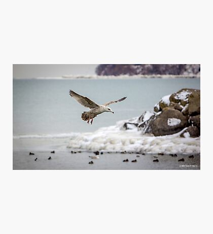 Above the Frozen Waters Photographic Print