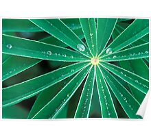 Lupine Leaves Poster