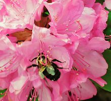 Bumble in Pink by Kat Call-Langworthy