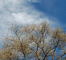 Tree Leaves And A Cloudy Sky by Erik Anderson