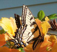 Grandma's Butterflies by Kat Call-Langworthy