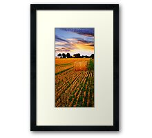 Golden sunset over farm field Framed Print