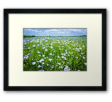 Blooming flax field Framed Print