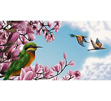 FLOWER AND BIRDS Photographic Print