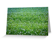 Blooming flax background Greeting Card