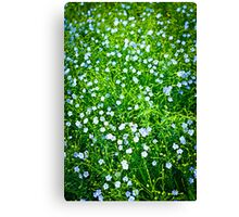 Blooming flax background Canvas Print
