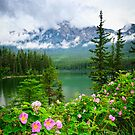 Wild roses and mountain lake in Jasper National Park by Elena Elisseeva