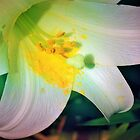 Macro lily highlights by ♥⊱ B. Randi Bailey