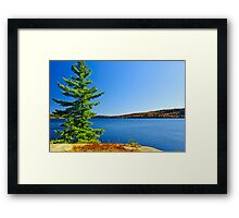 Pine tree at lake shore Framed Print