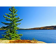 Pine tree at lake shore Photographic Print