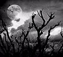 Hidden eyes in the night by Scott Mitchell