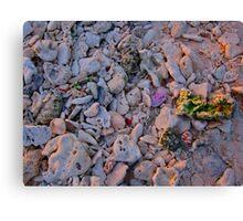 Coloured Rocks Canvas Print