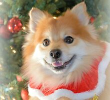 Merry Christmas From Maverick Little Fox by ©Dawne M. Dunton