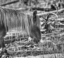 Rocky Mountain Blond by JamesA1