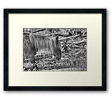 Rocky Mountain Blond Framed Print