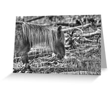 Rocky Mountain Blond Greeting Card