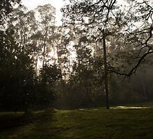 Kangaroo Valley - Early Morning Fog view 03 by Timothy Kenyon