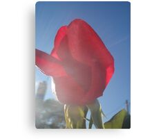 Blue sky, sunshine and rose bud Canvas Print