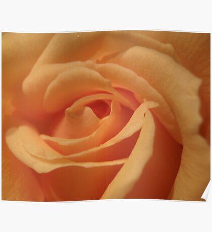 Gorgeous petals Poster