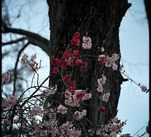 Blossoms w/red by Lynn Starner