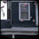 Blossoms w/house by Lynn Starner