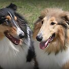 Lassie Love! by Vicki Childs
