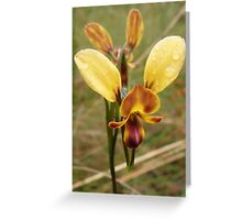 Wallflower Orchid Greeting Card