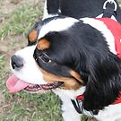 From Puppy Mill to Life of Riley by Vicki Childs