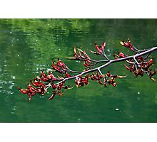 Branch Along the Water Photographic Print