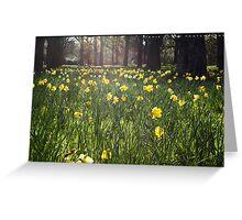 Glowing Daffodils Greeting Card