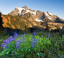 Lupines and Mount Shuksan by Michael Russell