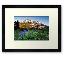 Lupines and Mount Shuksan Framed Print