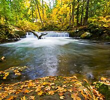 Waterfall on Whatcom Creek by Michael Russell