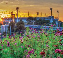 Field of Dreams - Melbourne Cricket Ground (MCG) by Dean Prowd Panoramic Photography