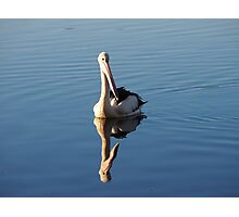 The Pelican Photographic Print