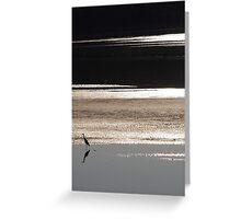 Waterbird on Lake Conjola Greeting Card