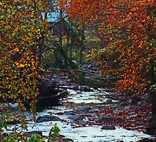 Autumn at the Creek in the Woods by Gilda Axelrod