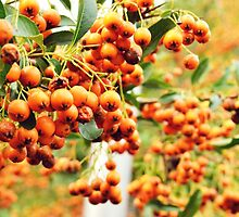 Autumn Orange Berries by Jessica Reilly