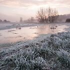 Cold Meadow Morning by Christopher Cullen