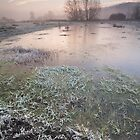 Cold Meadow Morning #2 by Christopher Cullen