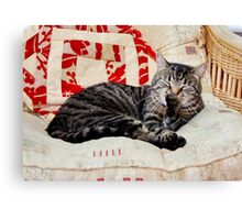 Max Relaxing Canvas Print
