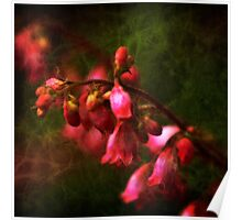 Coral Bells in Classic Square Format Poster