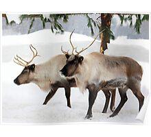 Caribou Capture Poster